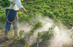 Pesticides photo