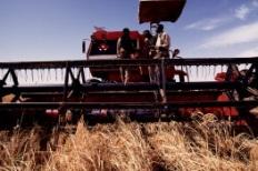agriculture Senegal