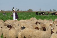 mediterranean_livestock_farming_systems_medium